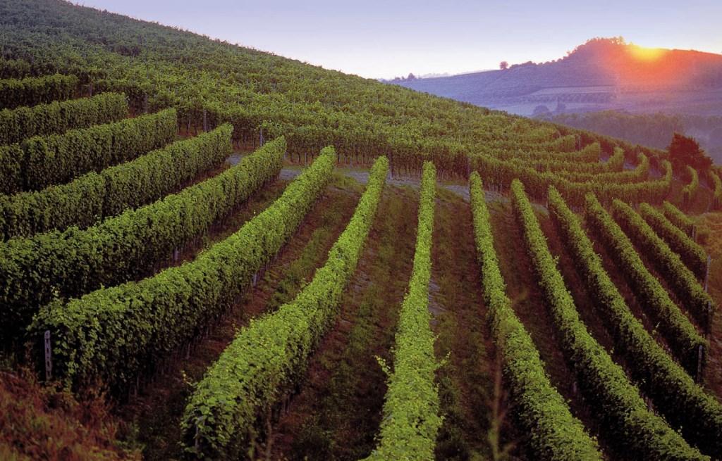 Astra Wines