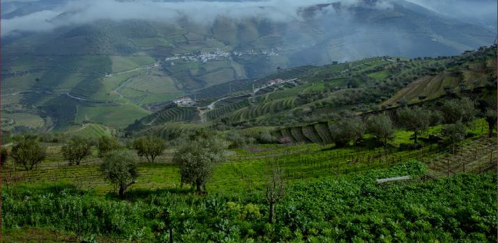 Quinta da Côrte 2015